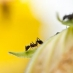 Do Ants Pray?
