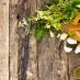 Amazing Health Benefits Of Dandelions And Other Weeds