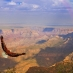 an eagle flying over the grand canyon
