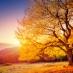majestic tree in sunlight