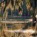 swamp in sunlight