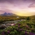 A pastoral scene in the Scottish Highlands