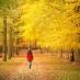 Woman walking in autumn leaves