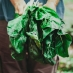 The Undiscovered Healing Powers Of Fruits And Vegetables