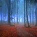 foggy pathway in forest