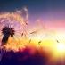 A dandelion loses its petals in the breeze