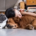 Energy Healing for You and Your Pets