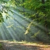 A forest in sunlight