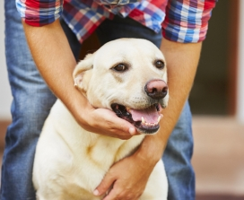 Do Your Pets Need Craniosacral Therapy?