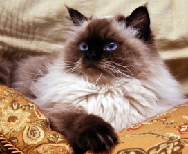The Dalai Lama's Cat Teaches Us About The Power of Meow
