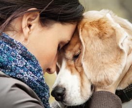 Connect To Your Pet's Heart And Help Them Heal
