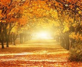 A woodland scene in autumn