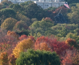 fall trees with american flag