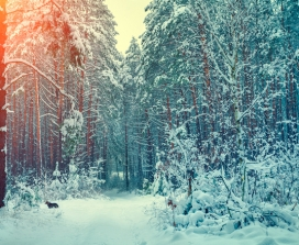 3 Blessings From The Winter Solstice