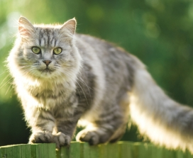 grey cat on a green wooden fence
