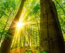 Sunlight in a forest