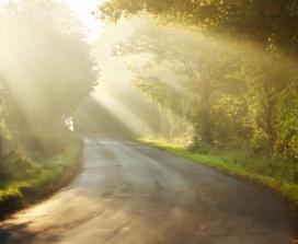 Sunlight through autumn trees