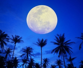 A full moon over coconut trees