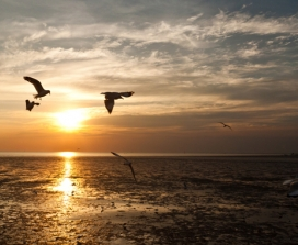 Seagulls soaring over the ocean