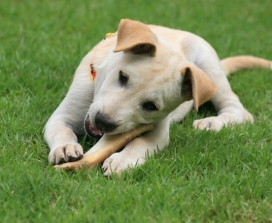 8 Myths Your Veterinarian Might Be Telling You