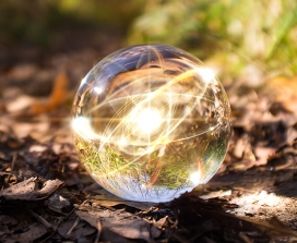 An orb in a forest
