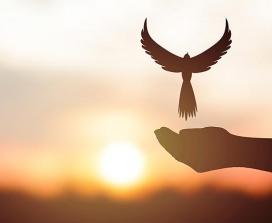 A bird above a hand