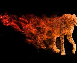A cheetah materialising