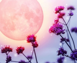 A pink full moon