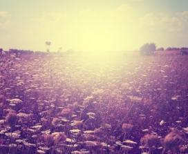 Sun in the meadow
