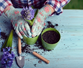 gardening and finding a hobby
