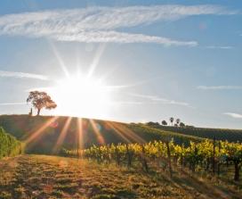 California crop