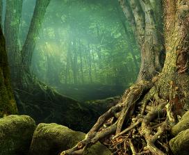 A mystical woodland
