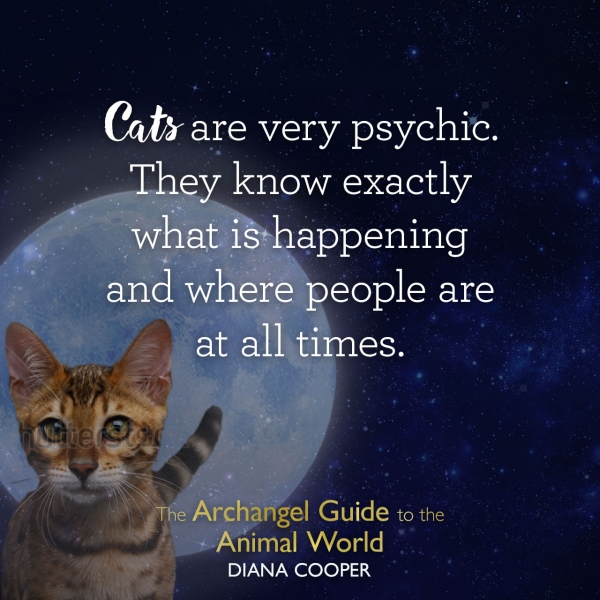 The Archangel Guide to the Animal World by Diana Cooper - HealYourLife